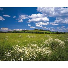 Product_partial_8-254_meadow_hd