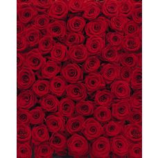 Product_partial_4-077_roses_hd