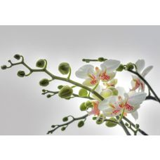 Product_partial_1-608_orchidee_hd